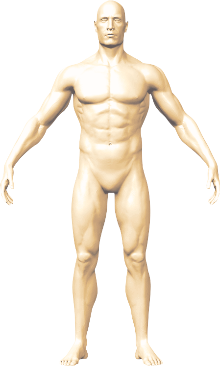 man body fron view
